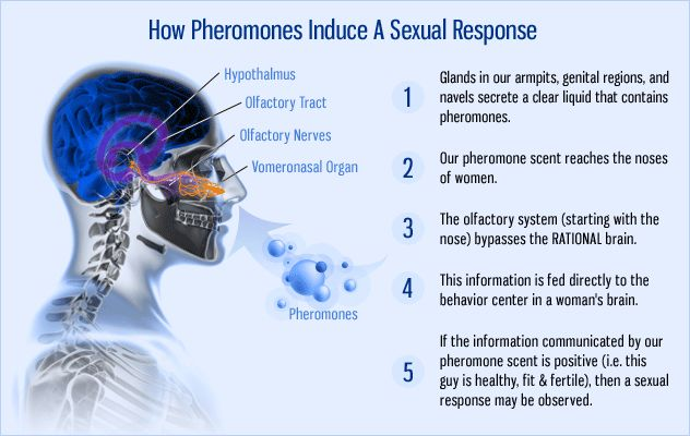 Pheromone to attract females
